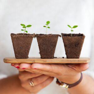 Ohne Garten anbauen - Täglich frisches Grün vom Fensterbrett - Pflanzenbrett - Unsplash - Daniel Hjalmarsson